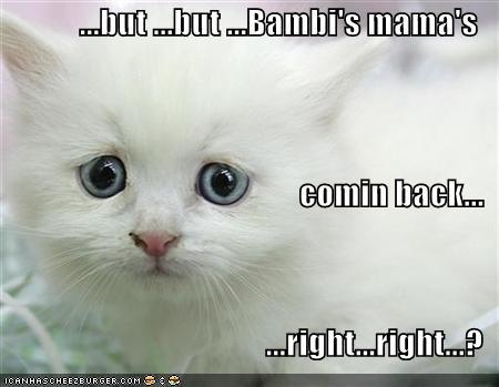 funny-pictures-sad-white-kitten-bambi-mom