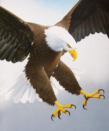 eagle-attack