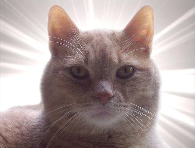 cat cc