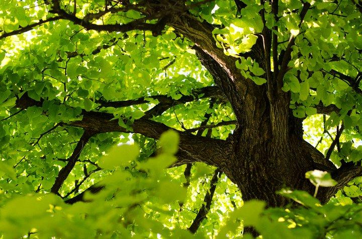 sean perkins tree