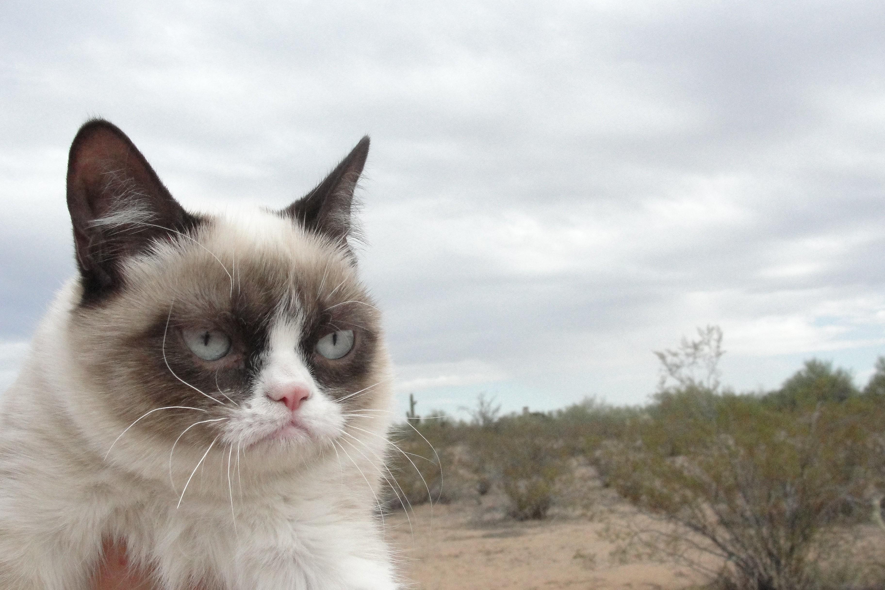 Animals___Cats_Grumpy_cat_in_the_desert_043850_