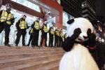 anarchopanda police